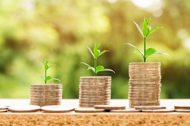 Geld-und-Pflanze