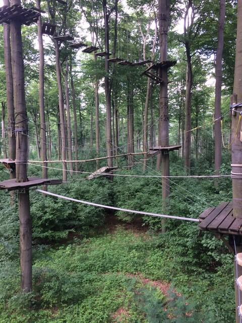 Auf die Bäume...fertig...los - Azubi-Klettern